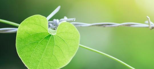 Mindful Living Course - The Forgiveness Myth